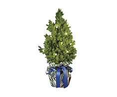 Kerstboom Blue Ribbon